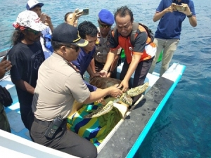 Four smuggled turtles into Bali have been finally released by the Kura-Kura Nusa Penida Foundation